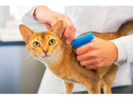 Чипирование домашних животных у вас на дому